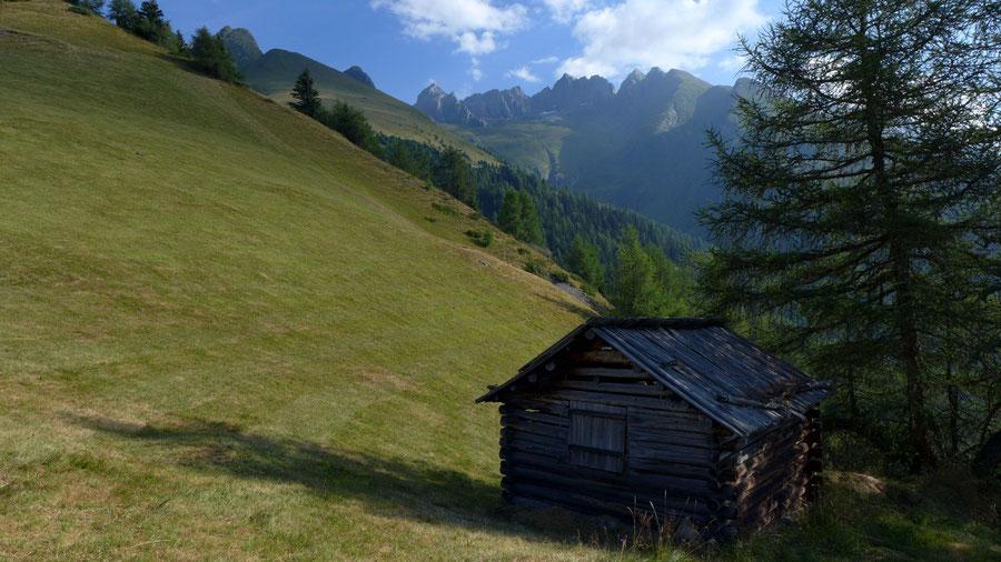 Bonn-Matreier-Hütte - Wanderung, Virgental, Venedigergruppe - Bergwiesen am Aufstieg Nilljochhütte