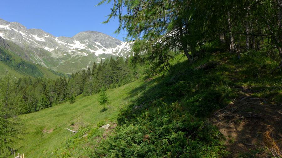 Hagener Hütte - Feldseekopf - Wanderung, Mallnitzer Tauern, Jamnigalm, Sportgastein