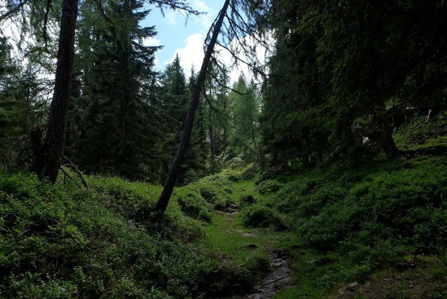 Mösernhütte Steig - Mernikalm Kälberhüttl - Wanderung, Kreuzeckbahn, Kärnten