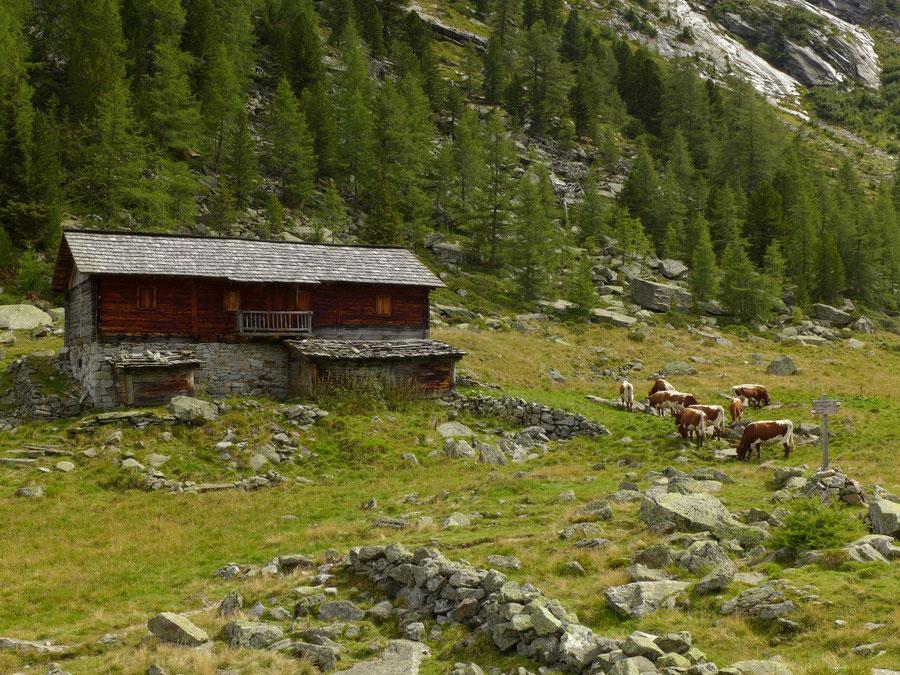 Gelttalalm - Wanderung, Gelltal, Rieserfernerhütte - Almgebäude und Jungvieh