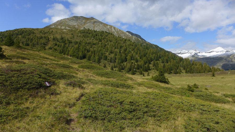 Kampleck - Kampleck über der Grutschnigalm - Bergtour, Reißeckgruppe, Mölltal, Kärnten