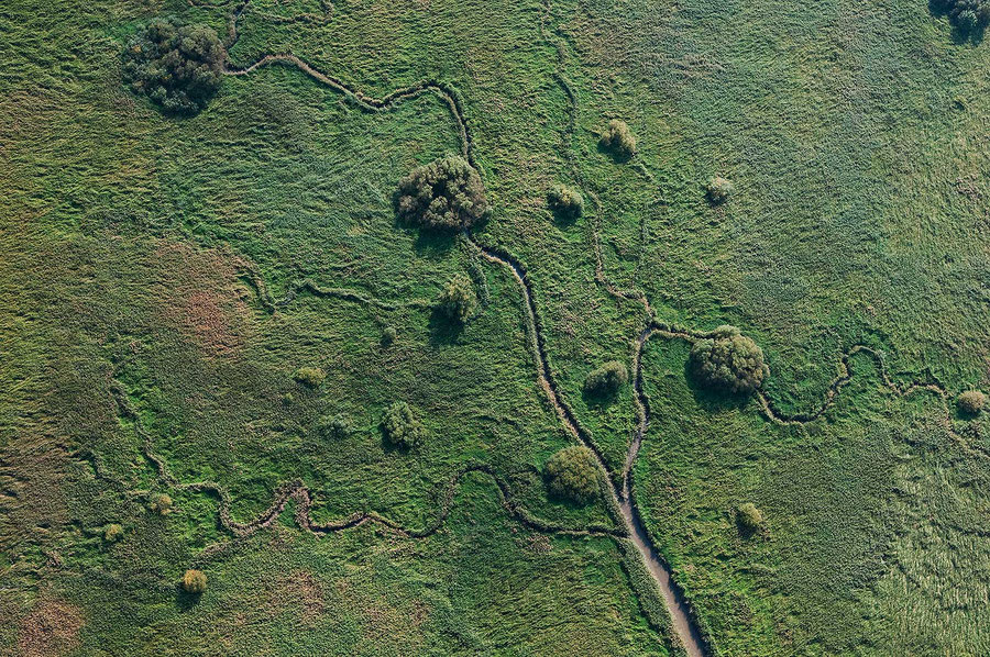 Ein Priel mit einzelnen Bäumen im Tideröhricht der Elbinsel Auberg / Naturschutzgebiet Haseldorfer Nebenelbe und Vorland, FHH Gebiet in Schleswig-Holstein