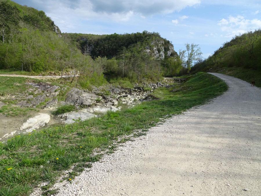 der Fluss teilt sich, links ein Bach, rechts die Mirna