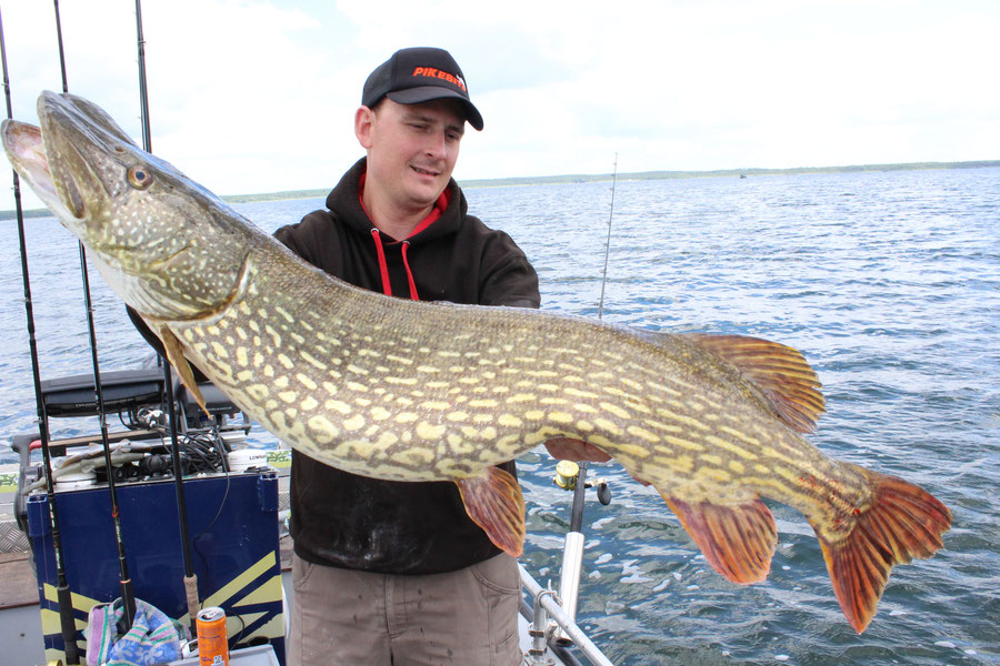 Für immer mehr Angler ein begehrtes Ziel: Der Großhecht