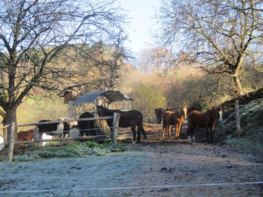 Pferdepension in Gammelsbach
