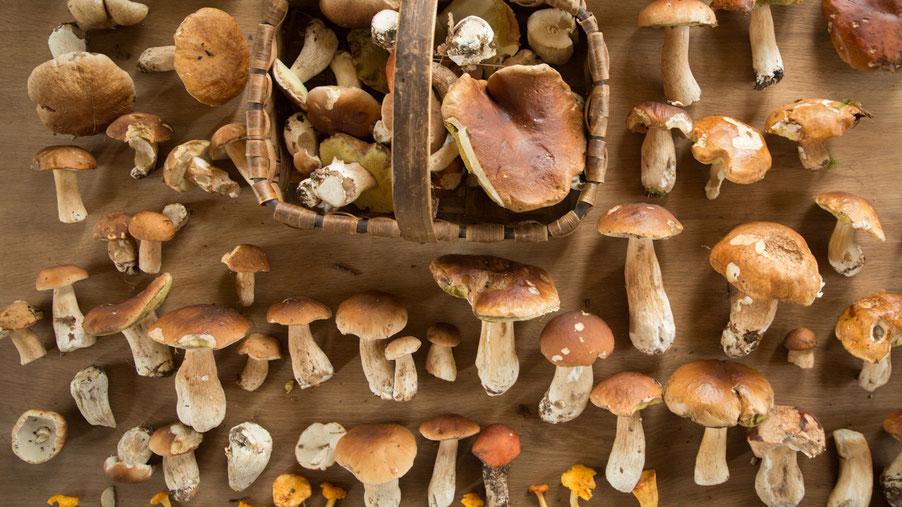 Herbstfrüchte Steinpilze und Butterpilze, Maronen