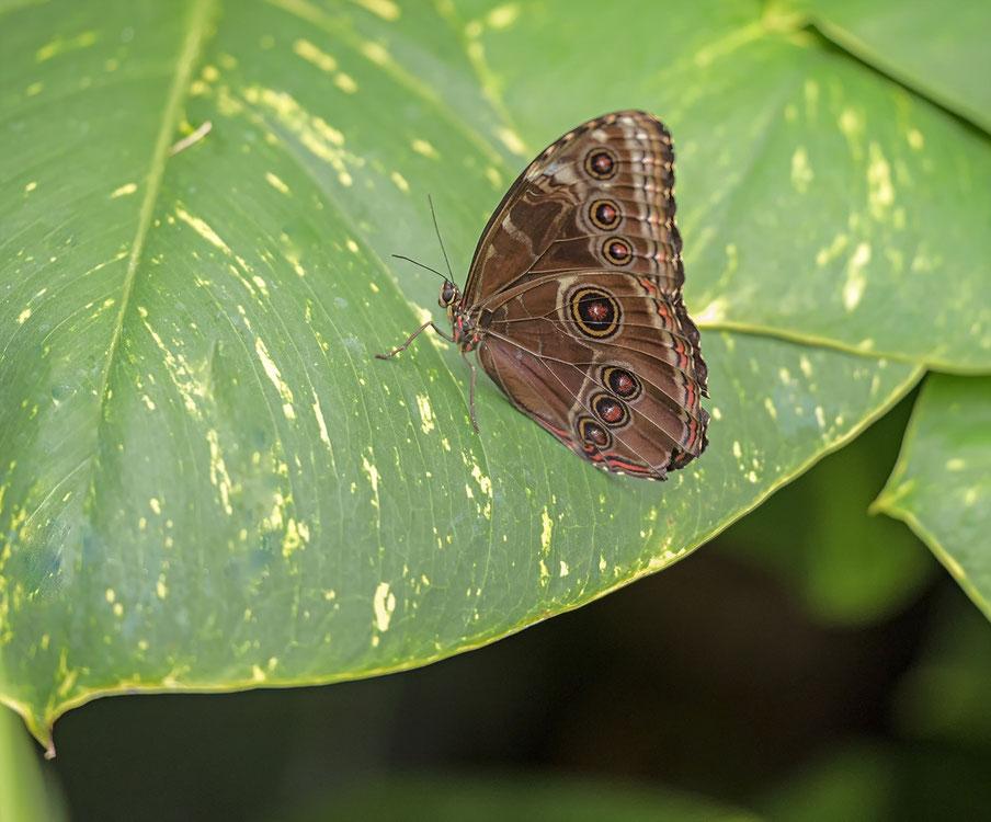 Vlinder naam onbekend.