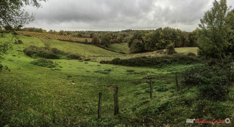 Vignoble et prairies du Domaine de Montagne, 457 Montagne, 33550 CAPIAN, Gironde, FRANCE