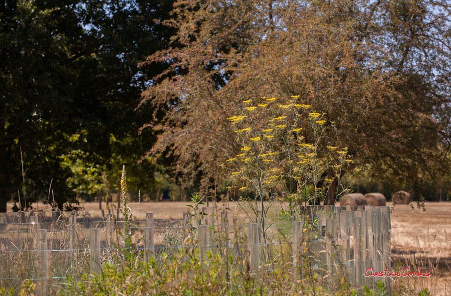 """""""Recinto sacro"""" d'Andrea Branzi. Prés de Goualoup, Domaine de Chaumont-sur-Loire. Lundi 13 juillet 2020. Photographie © Christian Coulais"""