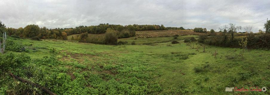 Vignes et prairies du Domaine de Montagne, 457 Montagne, 33550 CAPIAN, Gironde, FRANCE