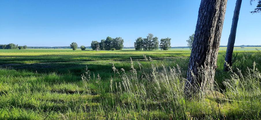 Weite Landschaft Prignitz