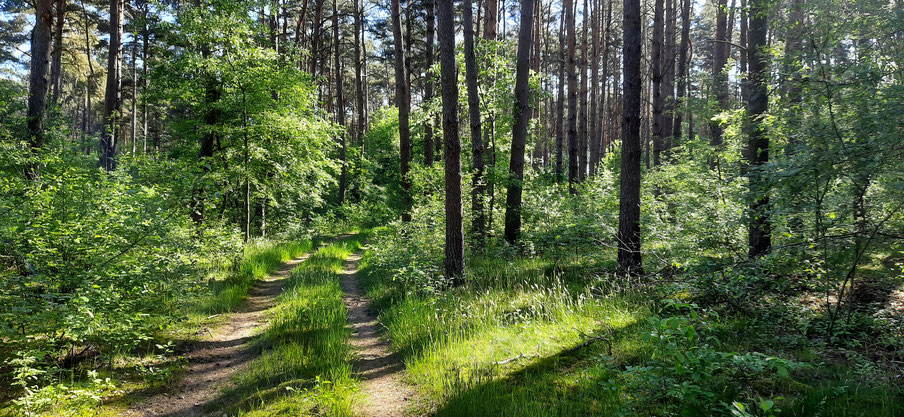 Natururlaub in der Prignitz, Landurlaub, Glamping,  Reiten, Kanu fahren, Elbe, Störche, Biber, Biosphärenreservat
