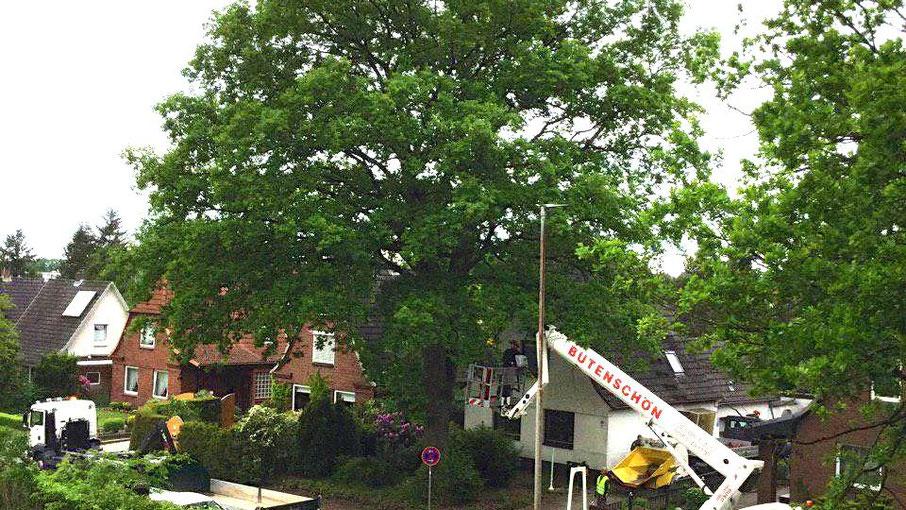 Der Baum ließ sich nicht retten (Fotos: Hans-Joachim Bull)
