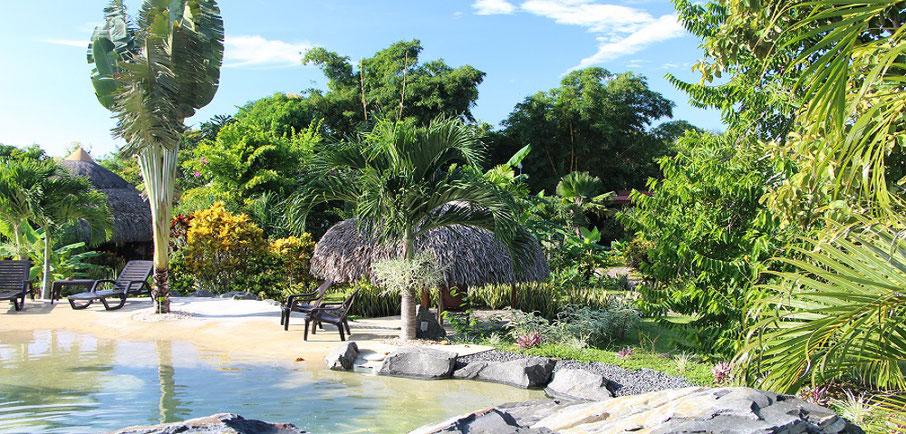 cabanas los colibris piscine naturelle dans jardin végétalisé