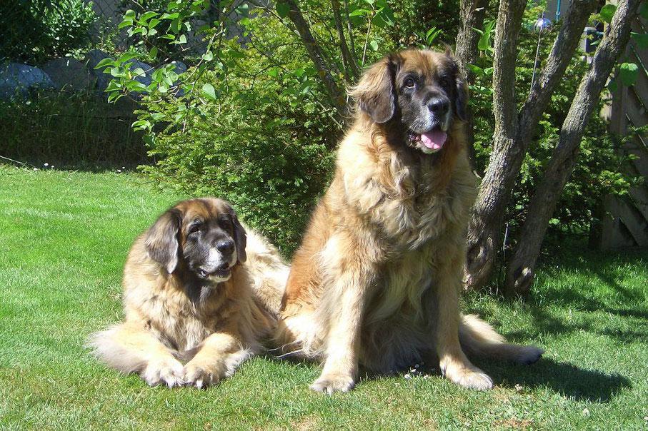 Belle-Amie & Babuschka 11 Jahre alt