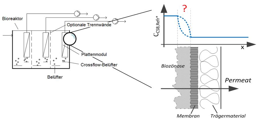 Untersuchung des Abbaupotentials des refraktären CSB in der Deckschicht bei der Membranbioreaktor-Technik (MBR)