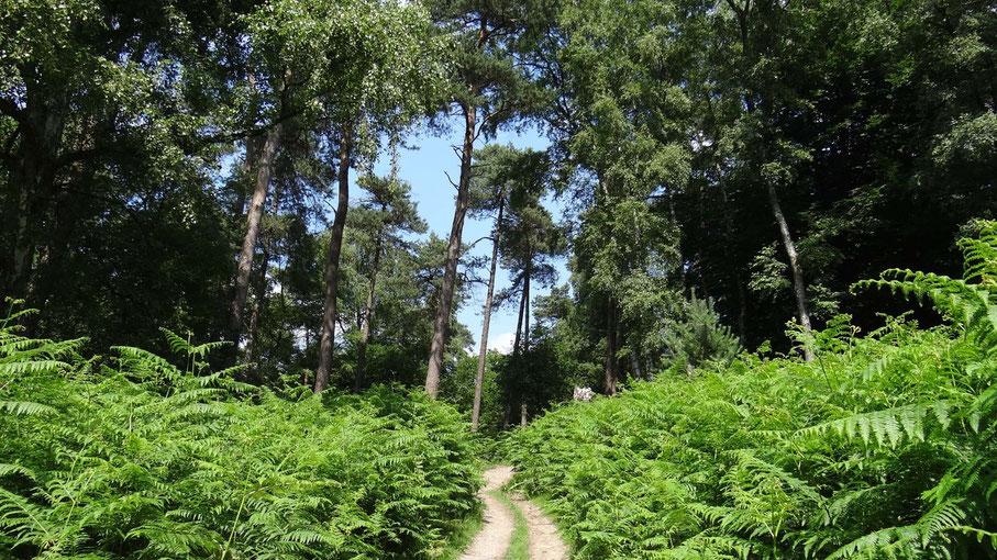 Hoge bomen van www.canvastirol.nl