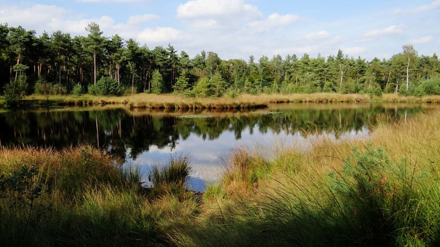 bosven in het bos van www.canvastirol.nl