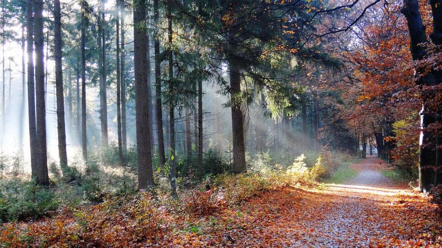 Herfstzon door het bos van www.canvastirol.nl