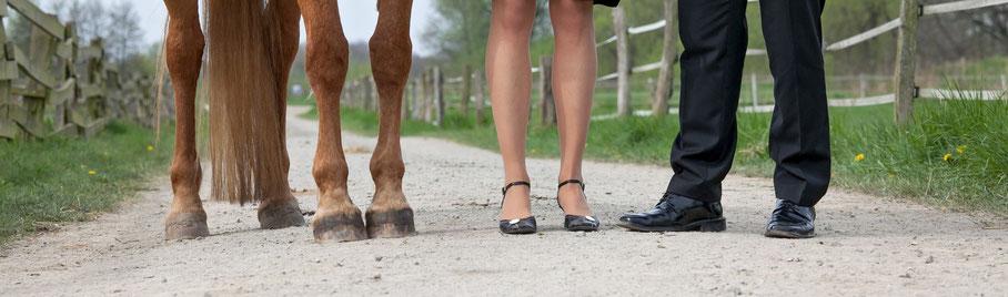 berufliche Weiterbildung mit Pferden als Trainingspartner