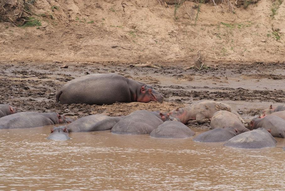 Sie zählen zu den vom Aussterben bedrohten Tierarten.