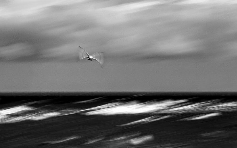 Möwe seagull schwarz-weiß monochrom Meer