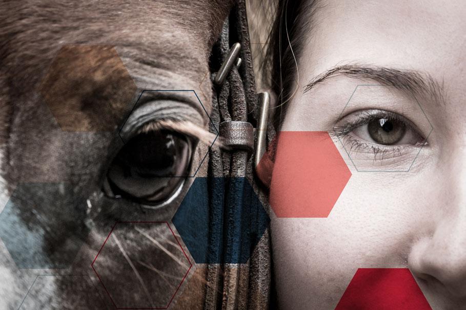Equicoaching : coaching assisté par le cheval