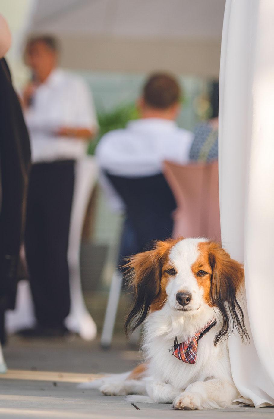 Hochzeit, der beste Fotograf, Russelsheim am Main, Nauheim, Bischofsheim, Bauschheim, Hessen, Fotografie, Reportage, Portrait, Hund, Tieren