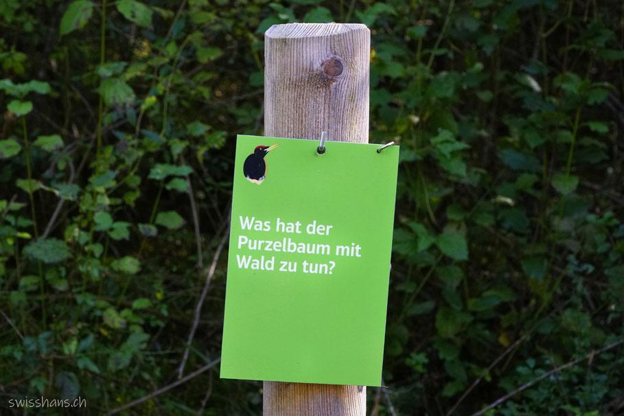 Informationstafel auf dem Walderlebnispfad Vaduz