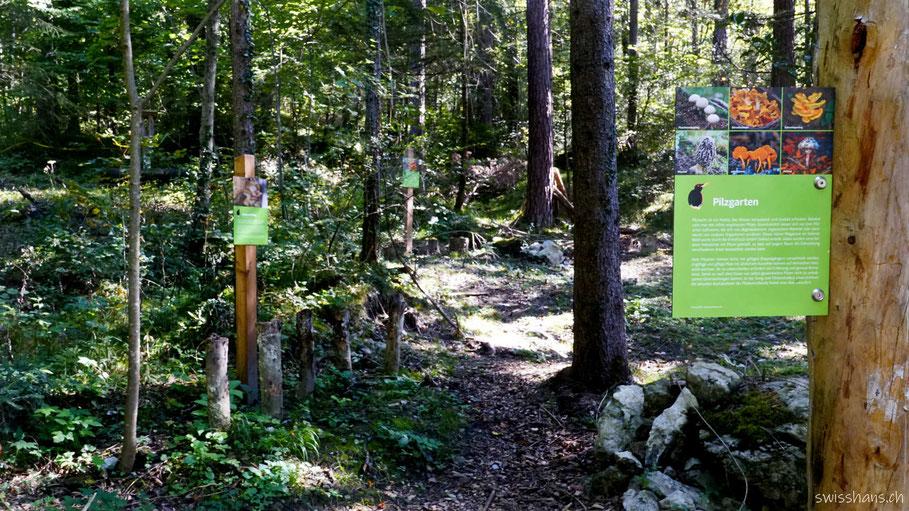Der Pilzgarten auf dem Walderlebnispfad Vaduz