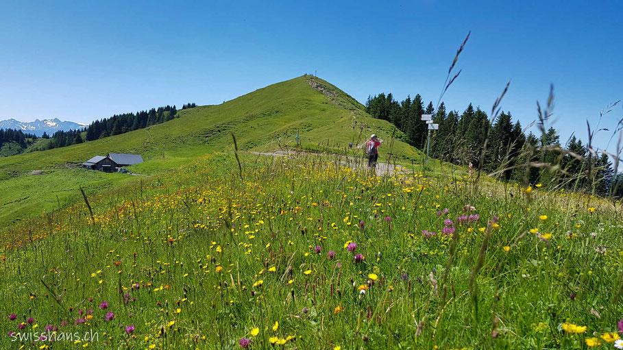 Blumenwiese beim Berg Hohe Kugel