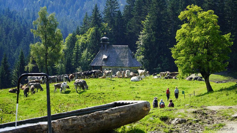 Rinder bei der Kapelle bei Hämmerles Älpele