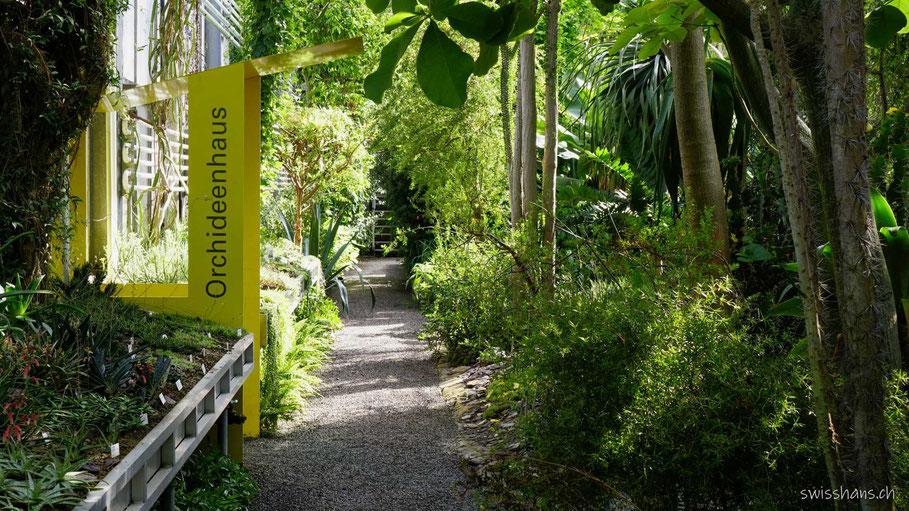 Tropenhaus im Botanischen Garten St.Gallen