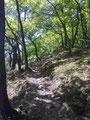 Trail Richtung Veldenz