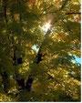 Initiation à la psychanalyse transgénérationnelle et élaboration de l'arbre