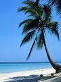 Urlaub unter Palmen...