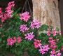 Vieille poutre et fleurs