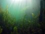 Großer Ammelhsainer Steinbruchsee
