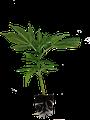 Growshop Graz / Hanfstecklinge online kaufen / bestellen