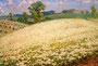 «Гречихи цвет», 1982