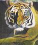 Tiger  Originalgrösse BxH = 65x78 cm  Acryl auf Gmmimatte