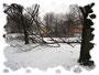 m Moment fangen die Arbeiter an die alten Bäume zu fällen. 15.02.2011