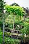 gelberTrompetenbaum mit Stamm