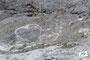 ein Gruss an Sabine - Versteinerungen in der Watzmannostwand