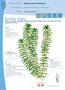 Guide des plantes envahissantes - Agence Régionale Pour l'Environnement en PACA - 2009