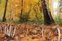Fantasie & Wirklichkeit Fotografien und Gedichte Kathrin Steiger märchenhaft verträumt Herbst Herbstzeit