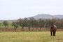 Vue sur la Colline de Sion, sous le regard d'un cheval de trait, Vandeléville