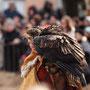 Compagnie de l'Hippogriffe - Aigle Piguargues