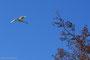 Le Vol du cygne, Chaudeney-sur-Moselle