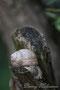 Escargot sur une souche - Fontenoy-sur-Moselle (54)